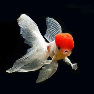 Hladnovodne ribe