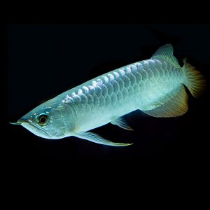 Ostale ribe