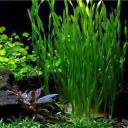 Biljke za pozadinski plan