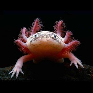 Ostale slatkovodne životinje